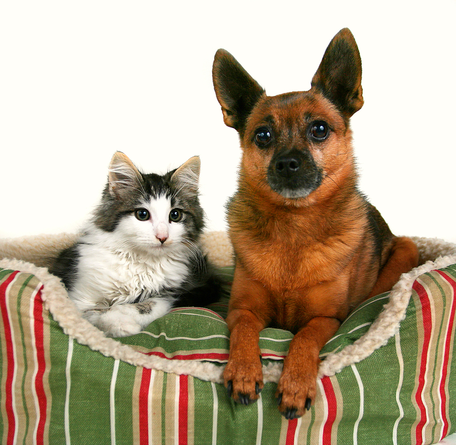 puppy and kitten care from your veterinarian in coronado and imperial beach
